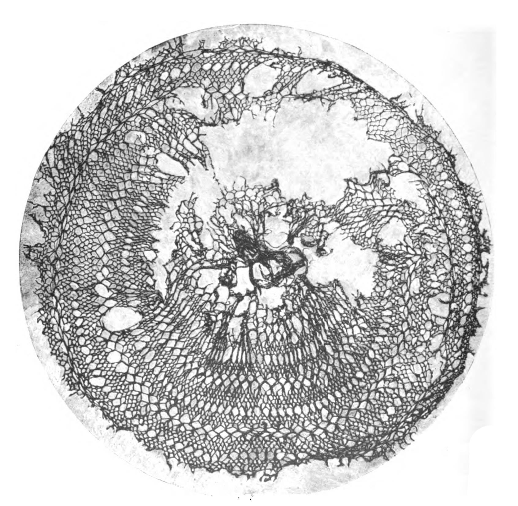 An ancient lace hairnet specimen from a Roman cemetery in Middle Egypt Image from: A history of hand-made lace: Dealing with the origin of lace, the growth of the great lace centers, the mode of manufacture, the methods of distinguishing and the care of various kinds of lace. By Jackson, Emily, Mrs. F. Nevill Jackson. Published 1900. Publisher London: L.U. Gill; New York: C. Scribner's Sons. Retrieved from openlibrary.org