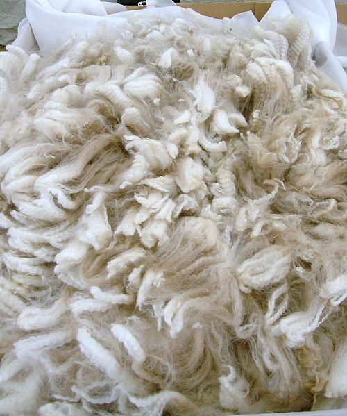 Alpaca fleece, by C. Goodwin